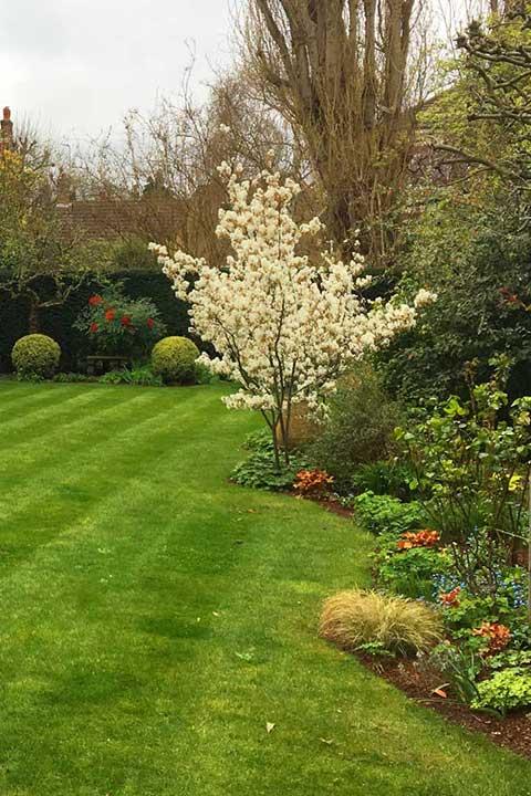 Landscape gardener Willesden Green